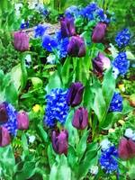Spring Garden in Shades of Purple