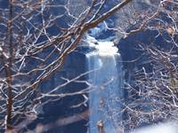 Taughannock Falls Through the Trees
