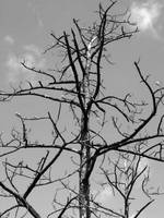 Barren Tree