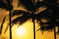 Hawaii, Palm Trees Silhouetted At Sunset, Sun Hang