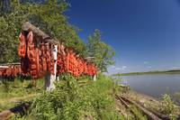 Red Salmon hang on drying rack along Kuskokwim Riv