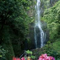 """""""Hawaii, Maui, Wailua Waterfall And Rainforest"""" by DesignPics"""