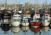 Rows Of Boats In A Harbour, Kilkeel, County Down,
