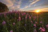 Prairie Wildflowers During Sunset In Central Alber