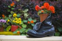 Close-Up Of Shoe Planter In Garden, Glengarriff, C