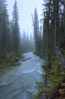 Fog Over The Emerald River, Yoho National Park, Br