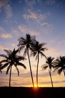 View Of Palm Trees At Sunset, Pale Blue Sky, Wispy