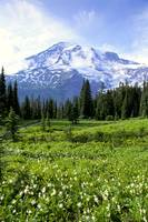 Washington, Mt. Rainier National Park, Meadow Alon