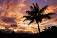 Fiji, Coconut Palm Tree Silhouetted Against A Fier