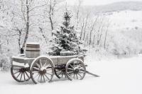 Wooden Wagon And Trees Covered In Snow, Alberta, C