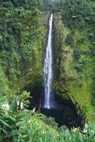 Hawaii, Big Island, Akaka Falls, Lush Greenery In