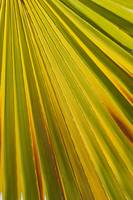 Close Up Of Palm Leaf, Palm Springs, California