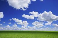 White Clouds In The Sky And Green Meadow