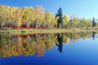 Fall Trees And Whiteshell River, Whiteshell Provin