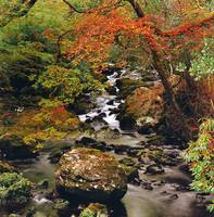 Stream Near Glengariff, County Cork, Ireland