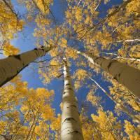 """Colorado, Near Steamboat Springs, Buffalo Pass, Ye"" by DesignPics"