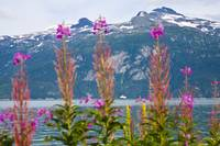 Scenic view of Lynn Canal near Haines with MV Colu