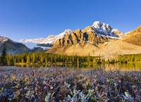 Bow Lake And Crowfoot Mountain At Sunrise In Fall,