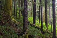 Temperate Rain Forest, Vancouver Island, British C