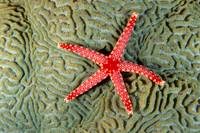 Solomon Islands, Seastar