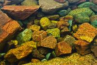 Colourful Rocks In A Pool Of Water, Killarney Prov