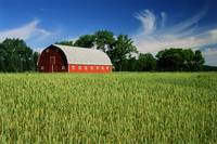 Red Barn And Wheat Field, Myrtle, Manitoba