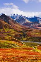 Fall Colours And Alaska Range, Denali National Par