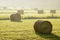 Hay Bales In Mist At Sunrise, Bas-Saint-Laurent Re