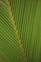 Close-Up Detail Of Coconut Palm Leaf