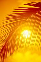 Hawaii, Silhouette Of Palm Frond Against Golden Or