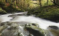 Fast Flowing Water Over Mossy Rocks In Tollymore F
