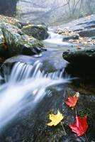 Small Stream, Shenandoah National Park, Virginia