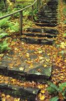 Stone Stairway In Forest, Cape Breton Highlands Na