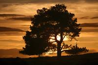 Tree At Sunset, North Yorkshire, England