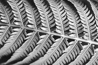 Hawaii, Extreme close-up detail of tree fern stem