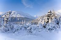 Winter scenic of snowcovered Spruce trees and the