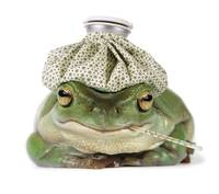 Frog With Water Bottle On Head And Thermometer In