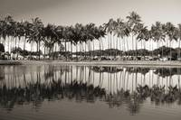 Hawaii, Oahu, Ala Moana Beach Park, Line Of Palm T