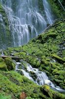 Oregon, Willamette Valley, Lower Proxy Falls, Gree