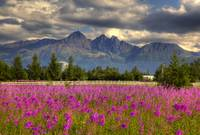 Scenic view of Pioneer peak with Fireweed in the f