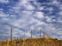 Fenceline In Pasture With Cumulus Clouds In Sky Ne