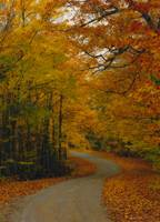 Backcountry Forest Road During Autumn