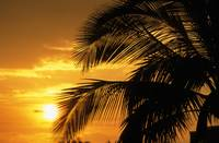 Palm Trees Silhouette With Sunset, Orange Sky And