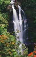 Hawaii, Big Island, Hamakua Coast, Nanue Falls Sur