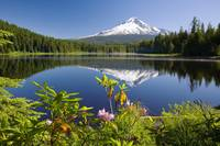 Reflection Of Mount Hood In Trillium Lake In The O