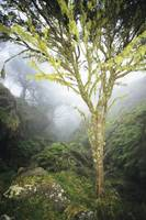 Hawaii, Maui, Kaupo, Tree With Moss Growth, Lush G