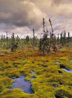 Eagle Plains, Yukon Territory, Canada
