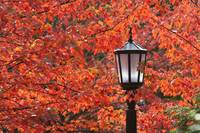 Autumn Colors On The Leaves And A Light Post Port