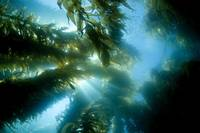 California, Catalina Island, Sunlight Streaming Th