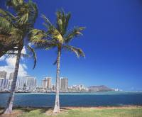 Hawaii, Oahu, Honolulu, Diamond Head Behind Palm T